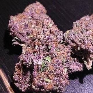 kopa sativa Purple